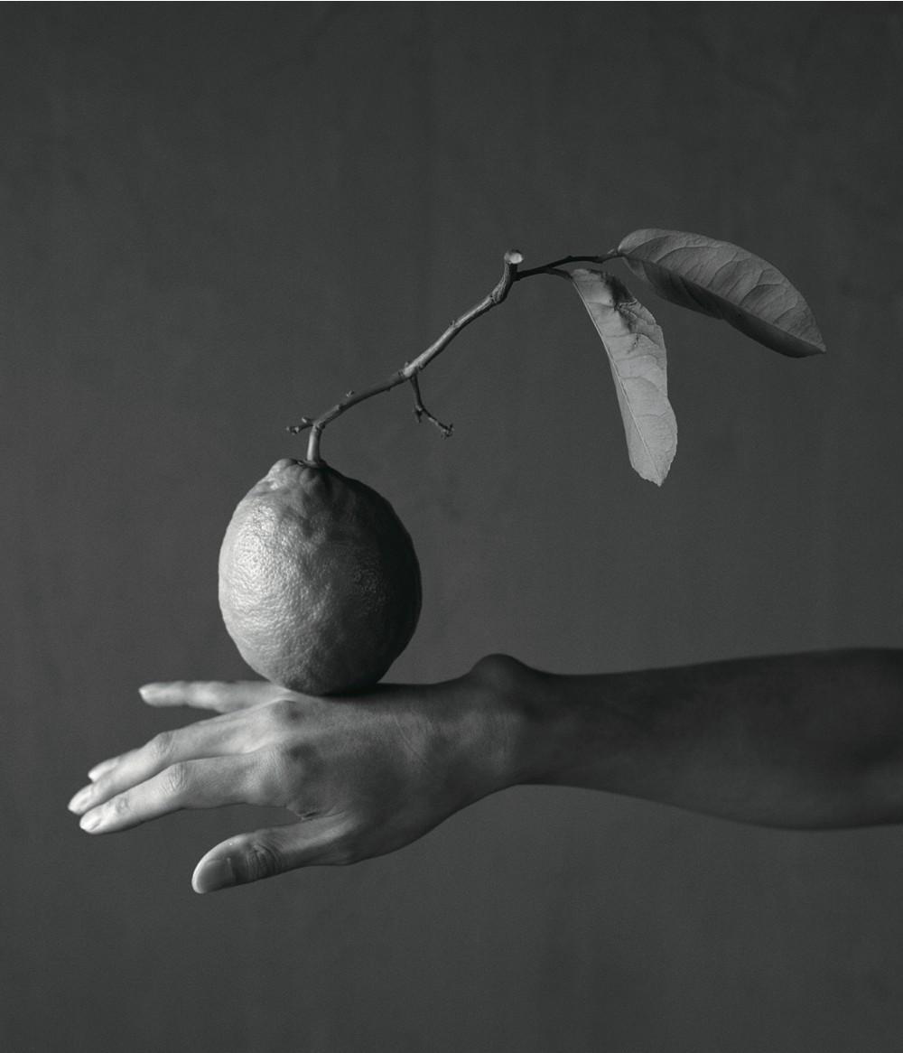 『静物画 - still life』画像
